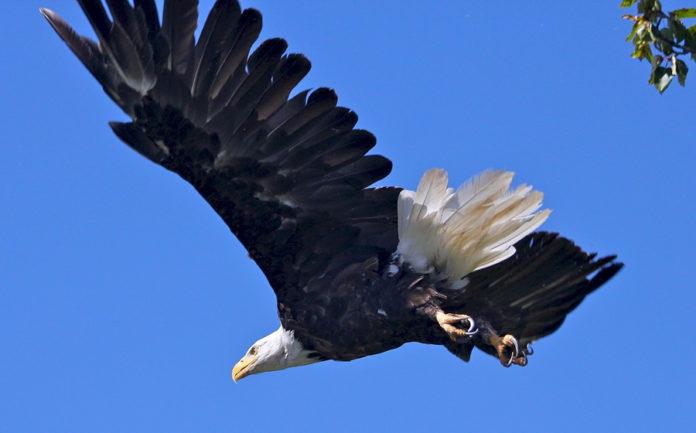Aprendiendo de las águilas