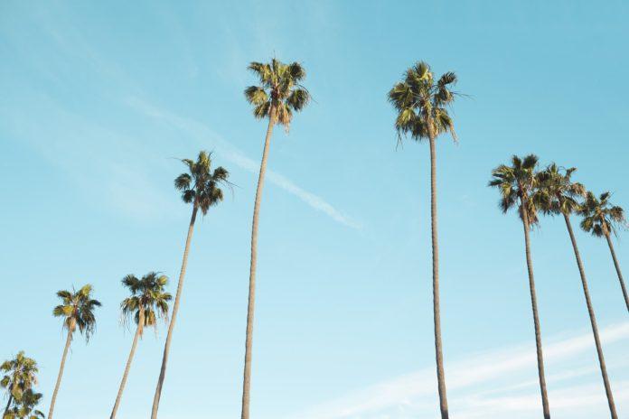 Las evidencias de la palmera se ven reflejadas en el justo